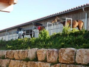 Funktionsbereich Pferde